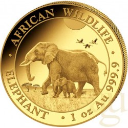 1 Oz Gold Somalia Elefant 2022